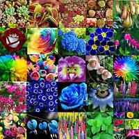 Flower Seed Various Ideal Garden Heirloom Potted Rare Flower Plant Ornamental C