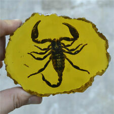 Amber King Fossil Plants Insects Characteristics Scorpion Decorative Pieces