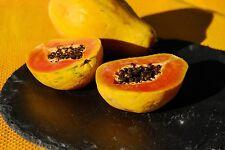 !00 Samen Papaya (Carica papaya)hawaiianische Papaya...kleinbleibende
