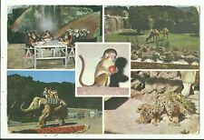 Postcard - Wellington Zoo, New Zealand - 1975