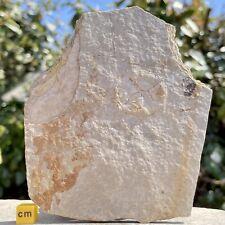 More details for fossilised discoides jellyfish oligocene france fsr570 ✔100% genuine ✔uk seller