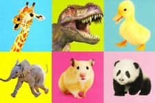 Assorted Pack of 6 Animal Birthday Cards Mixed Greetings Card Bundles