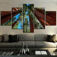 Giant Sequoia Trees 5 piece HD Modern Poster Art Wall Home Decor Canvas Print