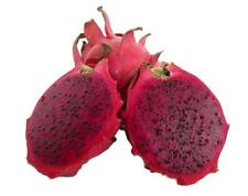 American Beauty Dragon Fruit - Hylocereus guatemalensis - Red Fruit