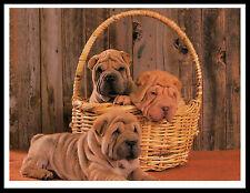 SHAR PEI PUPPIES CHARMING DOG PRINT POSTER