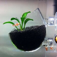 Aquatic Plant Crystal Glass Pot for Aquarium Aquascaping - High Quality Brand