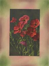 VINTAGE LARGE FLOWERED SCARLET FLAX FLOWER COLLAGE PICTURE ART PRINT W/  PASTELS