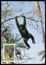 Sierra Leone MK Singe Chimpanzé Chimpanzee Monkey CARTE MAXIMUM CARD MC cm ba47