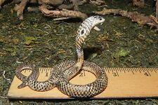 Asian King Cobra Schleich Wild Life Animal Figurine Replica Diorama