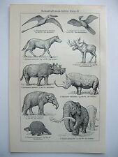 stampa antica old print RICOSTRUZIONE ANIMALI PREISTORICI FOSSILI 1923