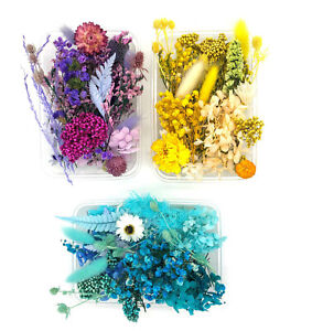 Getrocknete Blumen / Gepresste Blüten DIY Basteln Trockenblumen Harz Epoxidharz