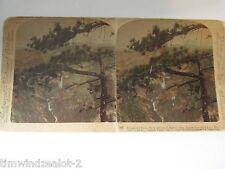 YOSEMITY VALLEY CA. NEVADE & VERNAL FALLS COPYRIGHT 1902
