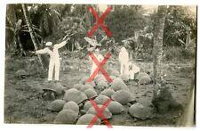 KREUZER EMDEN - orig. Foto, Riesenschildkröten Seychellen Auslandsreise 1926-28