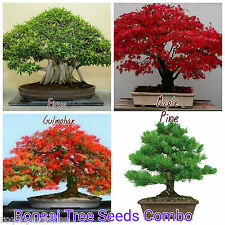 Bonsai Tree Seeds Combo - Red Maple, Bonsai Ficus ,Bonsai Pine , Bonsai Gulmohar