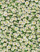 Fabric Daisies Packed with Leaves TIMELESS TREASURES Cotton 1/4 Yard 8003