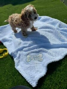 PERSONALISED DOG/PUPPY BLING GLITTER waffle FIRST BLANKET BONE  EMBROIDERED