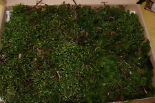 Moos aus dem Wald, Waldmoos, Naturmoos - getrocknet Deko Basteln Natur