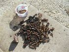 Massey Harris 101 JR tractor box parts pieces brackets valves springs bolts nuts