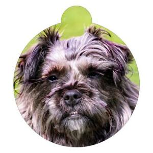 Affenpinscher Breed Picture Pet ID tag