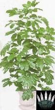 "66"" SCHEFFLERA ARTIFICIAL SILK PALM TREE PLANT ARRANGEMENT BUSH CHRISTMAS LIGHTS"