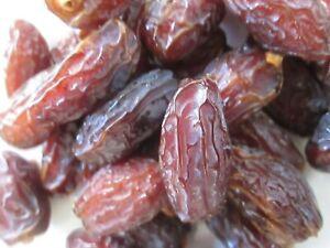 10 FRESH MEDJOOL DATE PALM SEEDS   (PHOENIX DACTYLIFERA)