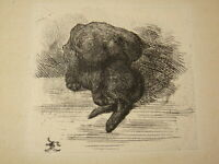 Frédéric REGAMEY 1849-1925 GRAVURE CHAT PARIS EAU FORTE IMPRESSIONNISME 1873 d