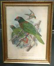 Antique 19th c. PARROT Lithograph/Print HAND COLORED R H Porter STREAKED LORY