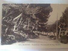 MENTON - sous-bois - Promenade du Cap Martin
