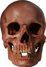 """Authentic Human Skull-Life Size Replica Aged Relic """"Blood Stained Red"""" From USA"""