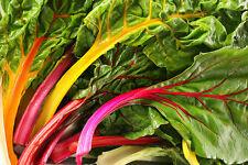 ACELGA ARCOIRIS ( RAINBOW CHARD ) 130 semillas / seeds