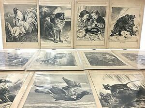 Antique Harrison Weir Art Lot Of 12 Chatterbox Book Illustration Prints 1887