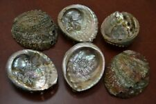 "5 PCS ONE SIDE POLISHED GREEN ABALONE SEA SHELL 4"" - 4 1/2"" #7952S"
