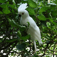 Realistic Macaw Parrot Artificial Feather Animal Ornament Home Decor White