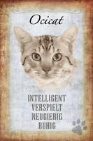 Ocicat Katze Cat Blechschild Schild gewölbt Metal Tin Sign 20 x 30 cm