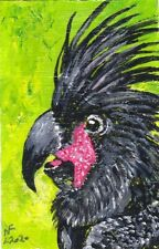 ACEO Original Black Cockatoo by artistnelson