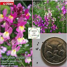 "100 LINARIA ""FAIRY BOUQUET MIXED"" SEEDS(Linaria macroccana); Colourful flowers"