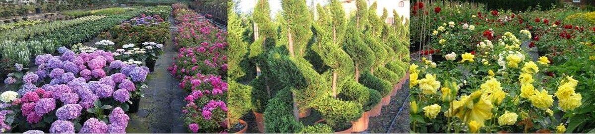 Die Baumschule und Pflanzencenter