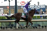 GLOSSY PHOTO PICTURE 8x10 California Chrome 2014 Kentucky Derby Winner