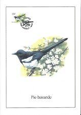 FDC 2697 - Oiseau Buzin sur gravure format A4 !