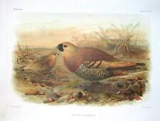 Vintage Birds Original Art Prints