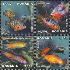 Romania 2012 Tropical Fish/Nature/Freshwater/Cichlids/Molly/Pets 4v set (n46122)