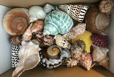 More details for collection old sea shells various colours shapes and sizes from around the world