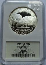 20 ZLOTYCH POLAND 2011 BORSUK BADGER MS70