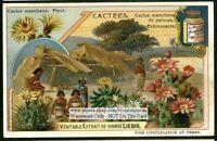 Desert Cactus Fower Blossom Echinocacte c1907 Trade Ad  Card