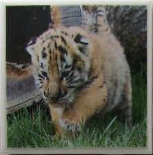 New listing Ceramic Tile Coaster - Baby Tigers - Set of 4 Drink /Bar Coaster - Marble 5B
