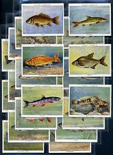 Spieler Zigarette Karte Set - Fresh-Water Fische (Groß) 1935 - Carp Lachs