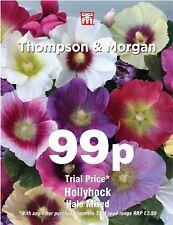 Thompson & Morgan - Fiore - Altea Halo Misto - 25 Semi