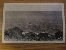 NOS VINTAGE ALASKA FUR SEAL AT PLAY REAL PHOTO POSTCARD