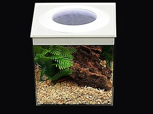 Large Vented Critter Cube For Young Spiders,Slings & Mantis Nymphs  FROM £4,99*