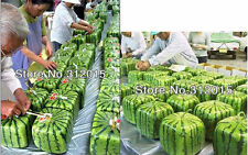 8 SQUARE WATERMELON SEEDS SWEET FRUIT SEEDS NEW GENERATION SCARCE HOME GARDEN